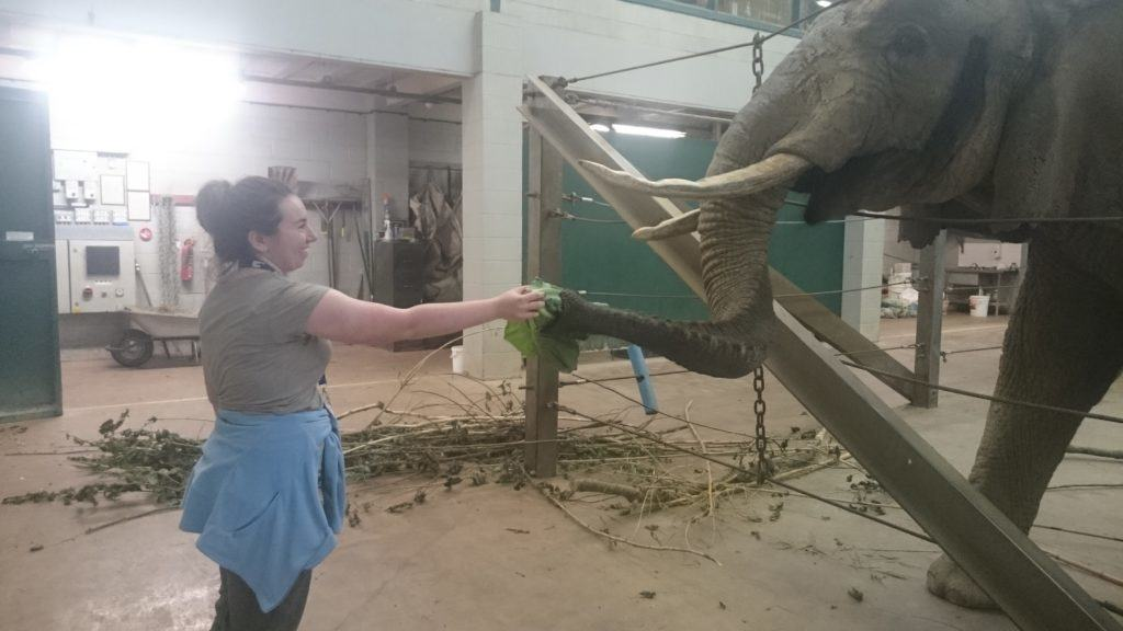 Jesse with 'Duchess' the Elephant at Paignton Zoo