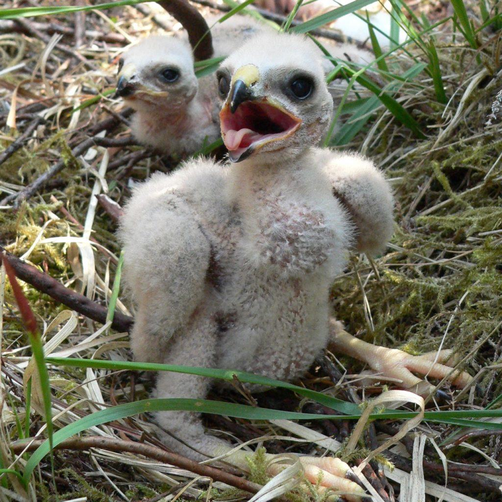 Hen Harriers are a Schedule 1 species and disturbing them requires a license. Images can also contain location data which can reveal sensitive information.