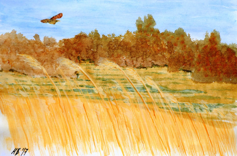 Wicken Christmas.A Uk Based Ecologist Whose Art Is Inspired By The